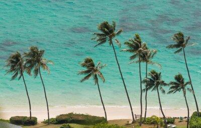 Fotomural Palmeras en la playa de Waimanalo, Hawaii