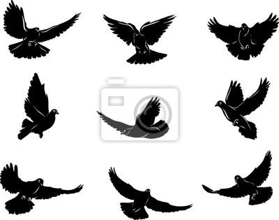 Paloma Paloma Volando Imagen En Blanco Y Negro Opciones De