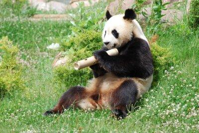 Fotomural Panda 1