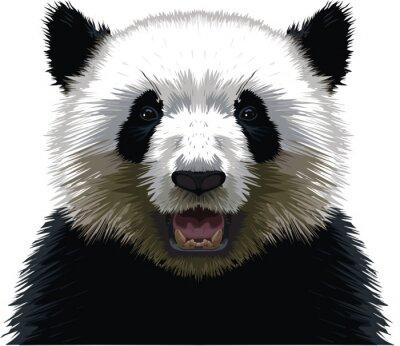 Fotomural PANDA - Buste