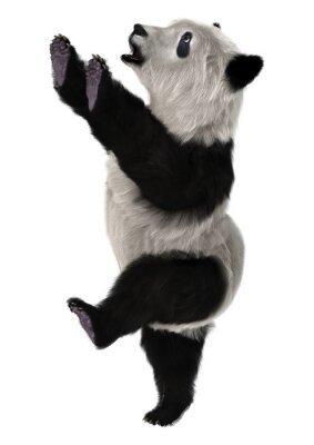 Fotomural Panda Cub de oso