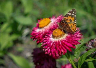 Fotomural Papillon