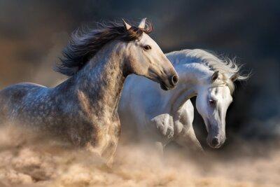 Fotomural Pareja de caballo correr en polvo a la luz del atardecer