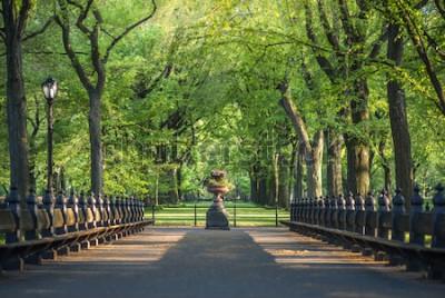 Fotomural Parque Central. Imagen del área de The Mall en Central Park, Nueva York, EE.UU.
