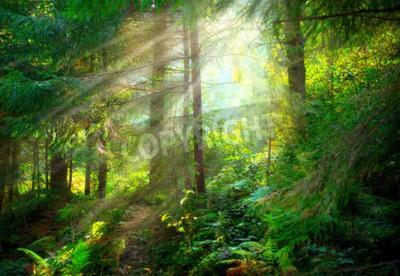 Fotomural Parque. Hermoso bosque brumoso viejo