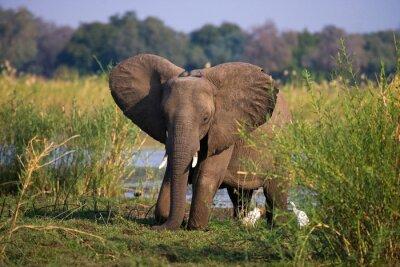 Fotomural Parque Nacional del Bajo Zambeze. Río zambeze Una excelente ilustración.