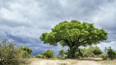 Fotomural Parque Nacional Kruger paisaje, Sudáfrica