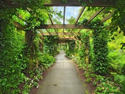 Fotomural Pasaje Pérgola en el jardín, rodeado de glicinia y plantas trepadoras