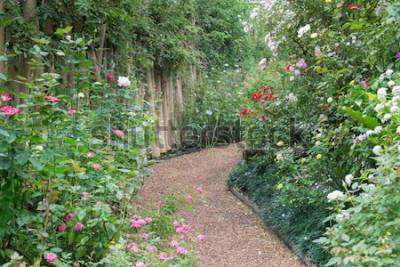 Fotomural Pasarela en jardín botánico de rosas, foto de stock