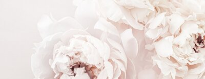 Fotomural Pastel peony flowers in bloom as floral art background, wedding decor and luxury branding design
