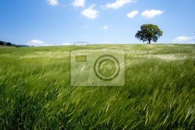 Fotomural paysage