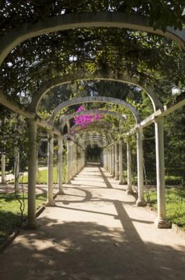 Fotomural Pérgola arqueada hermosa trayectoria infinita en jardín botánico, Río de Janeiro, el Brasil