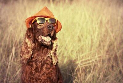 Fotomural perro divertido
