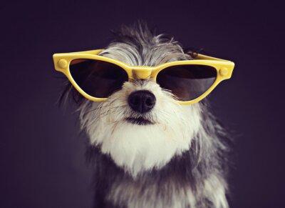Fotomural Perro en gafas 2