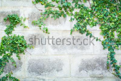 Fotomural Planta de enredadera verde sobre un fondo hermoso pared blanca