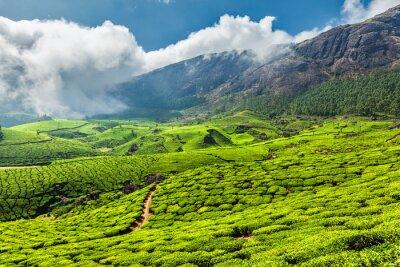 Fotomural Plantaciones de té en la India
