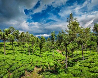 Fotomural Plantaciones de té en las montañas