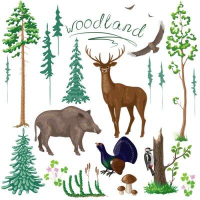 Fotomural Plantas y Animales de bosques Set