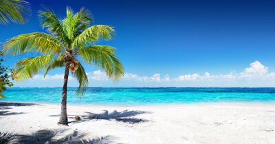 Fotomural Playa de coral escénica con palmera