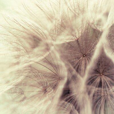 Fotomural Portarretrato abstracta de un salsifí prado