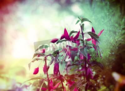 Fotomural Pretty Fuchsia flores en el jardín de verano de fondo cerca de tonos