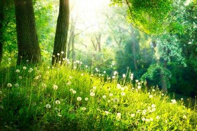 Fotomural Primavera Naturaleza. Hermoso paisaje. Hierba verde y árboles