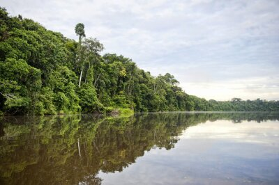 Fotomural Provincia de Tambopata