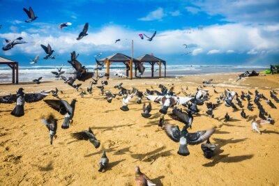 Fotomural Rebaño de palomas es ruidoso sale