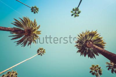Fotomural Redeo Los Angeles Vintge Palm Trees Vintage - cielos despejados de verano