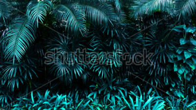 Fotomural resplandor del bosque tropical de la hoja en el fondo oscuro. Alto contraste.