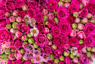 Fotomural Resumen de antecedentes de flores.