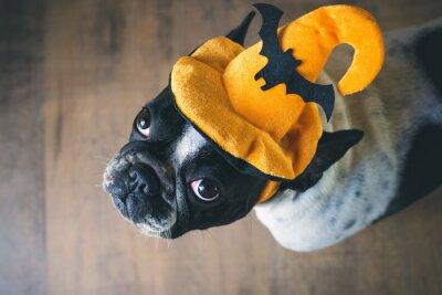 Fotomural Retrato de bulldog francés con sombrero de halloween