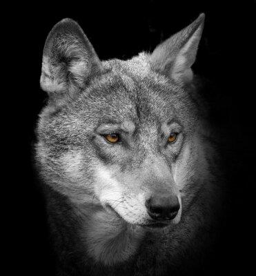 Fotomural Retrato de lobo