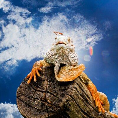 Fotomural Retrato de macro disparo en iguana cabeza