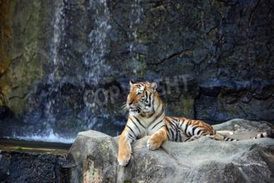 Fotomural Retrato de tigre