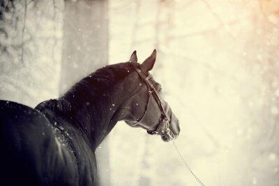 Fotomural Retrato de un caballo de los deportes
