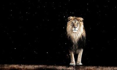 Fotomural Retrato de un hermoso león, patrón geométrico