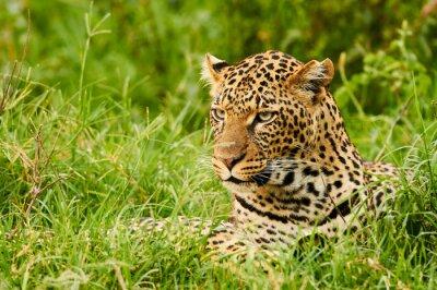 Fotomural Retrato femenino del leopardo