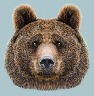 Fotomural Retrato ilustrado del oso en fondo azul