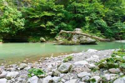 Fotomural Río de montaña en el Cáucaso cerca de Sochi