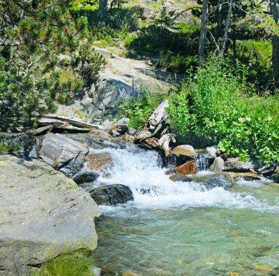 Fotomural Río de montaña y bosque de coníferas