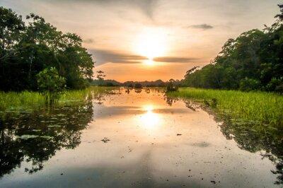Fotomural Río en la selva amazónica al atardecer, Perú, América del Sur