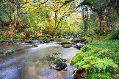 Fotomural Río mágico del bosque