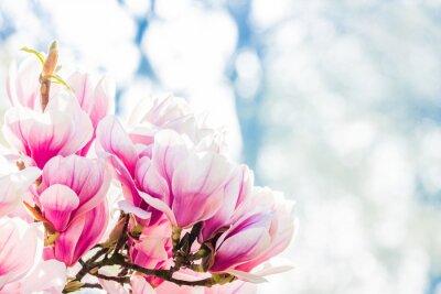 Fotomural rosa flor magnolia