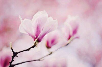 Fotomural rosa magnolie