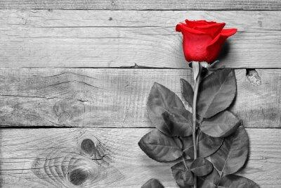 Fotomural Rosa roja sobre fondo blanco y negro de madera