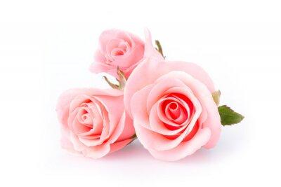 Fotomural rosa rosa flores sobre fondo blanco