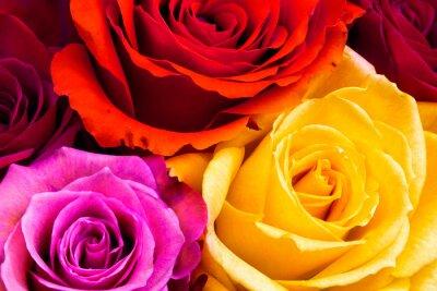 Fotomural Rosas de fondo
