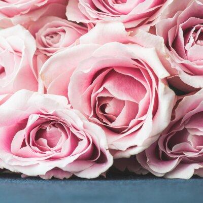 Fotomural Rosas rosas brillantes de fondo