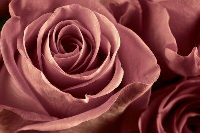 Fotomural Rose flowers close-up
